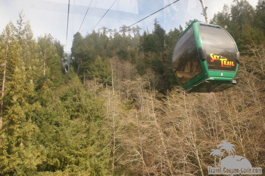 Redwood Forest Sky Trail Photos