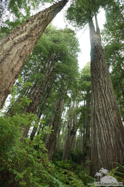 Northern California Redwood National Forest Photo